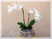Double Stem Imperial Orchids in Le Jardin Handmade Planter